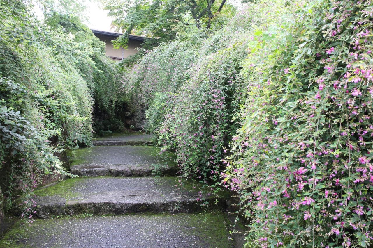 箱根美術館の萩の道