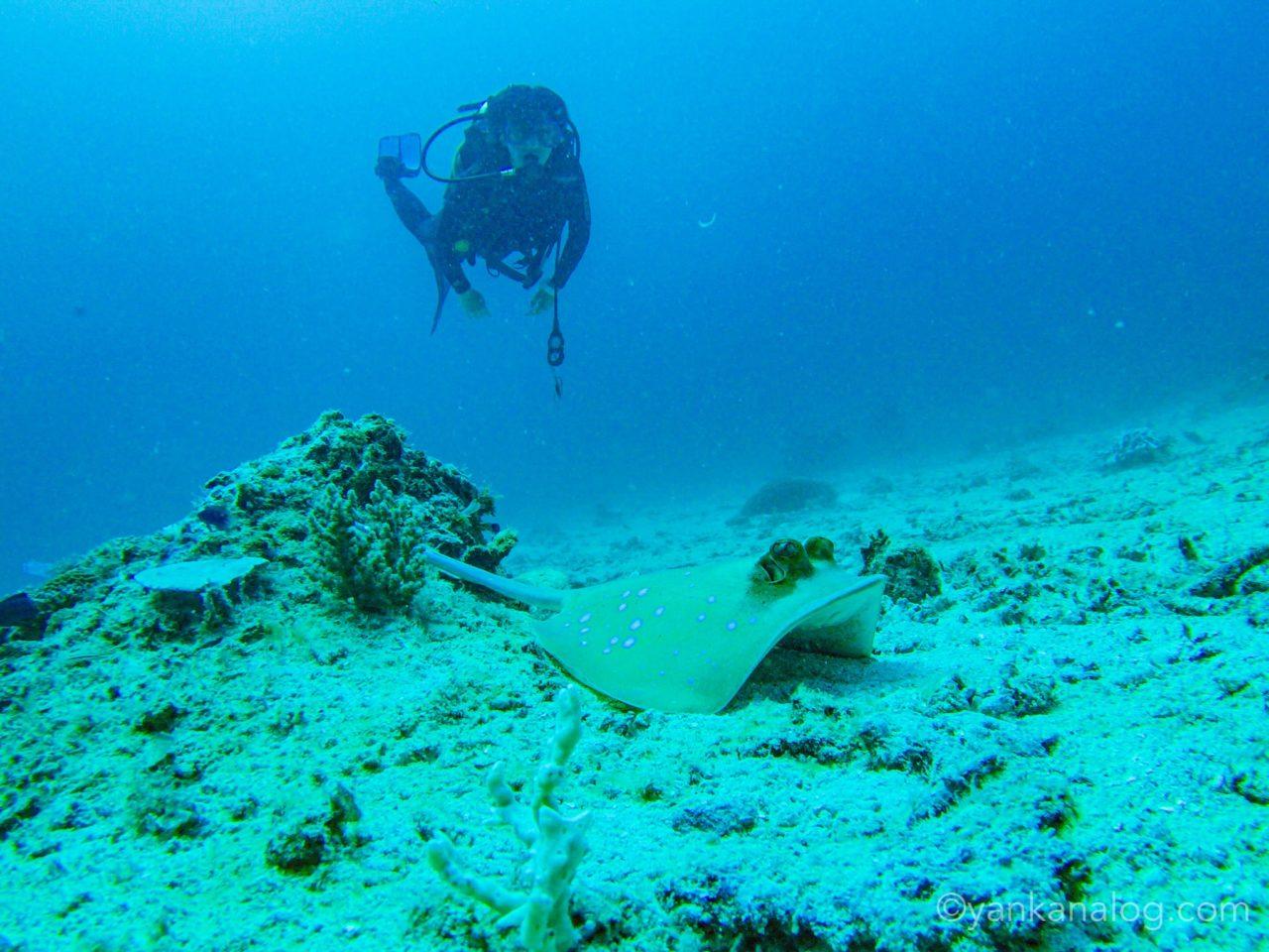 エルニドのダイビング2