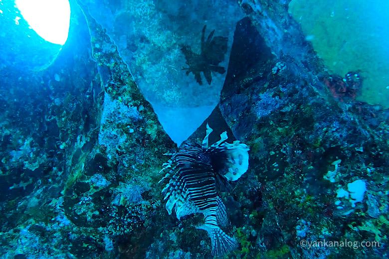 与論島ダイビング海中宮殿3
